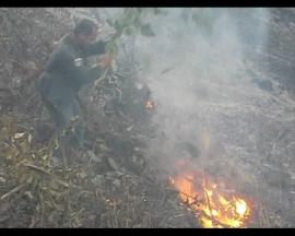 เผาป่าเอาที่ 1